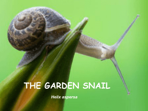 The snail - IES Valle del Cidacos