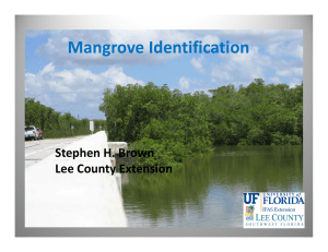 Mangroves - Lee County Extension