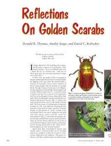 Reflections On Golden Scarabs