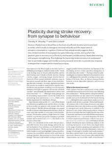 Plasticity during stroke recovery: from synapse to behaviour