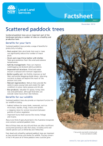 Scattered paddock trees - Central West Local Land Services