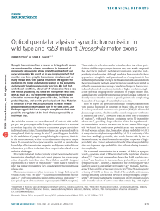 Optical quantal analysis of synaptic transmission in wild