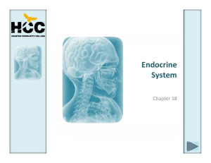 Endocrine System - HCC Learning Web