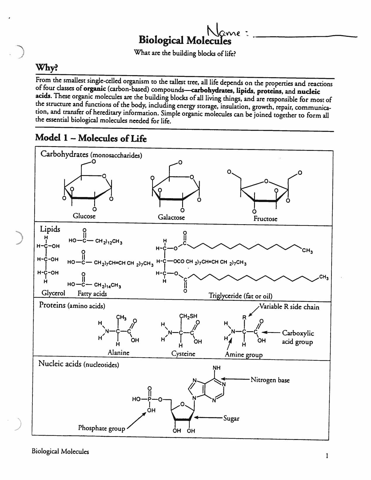 Worksheets Biological Molecules Worksheet biological molecules whelp sheet