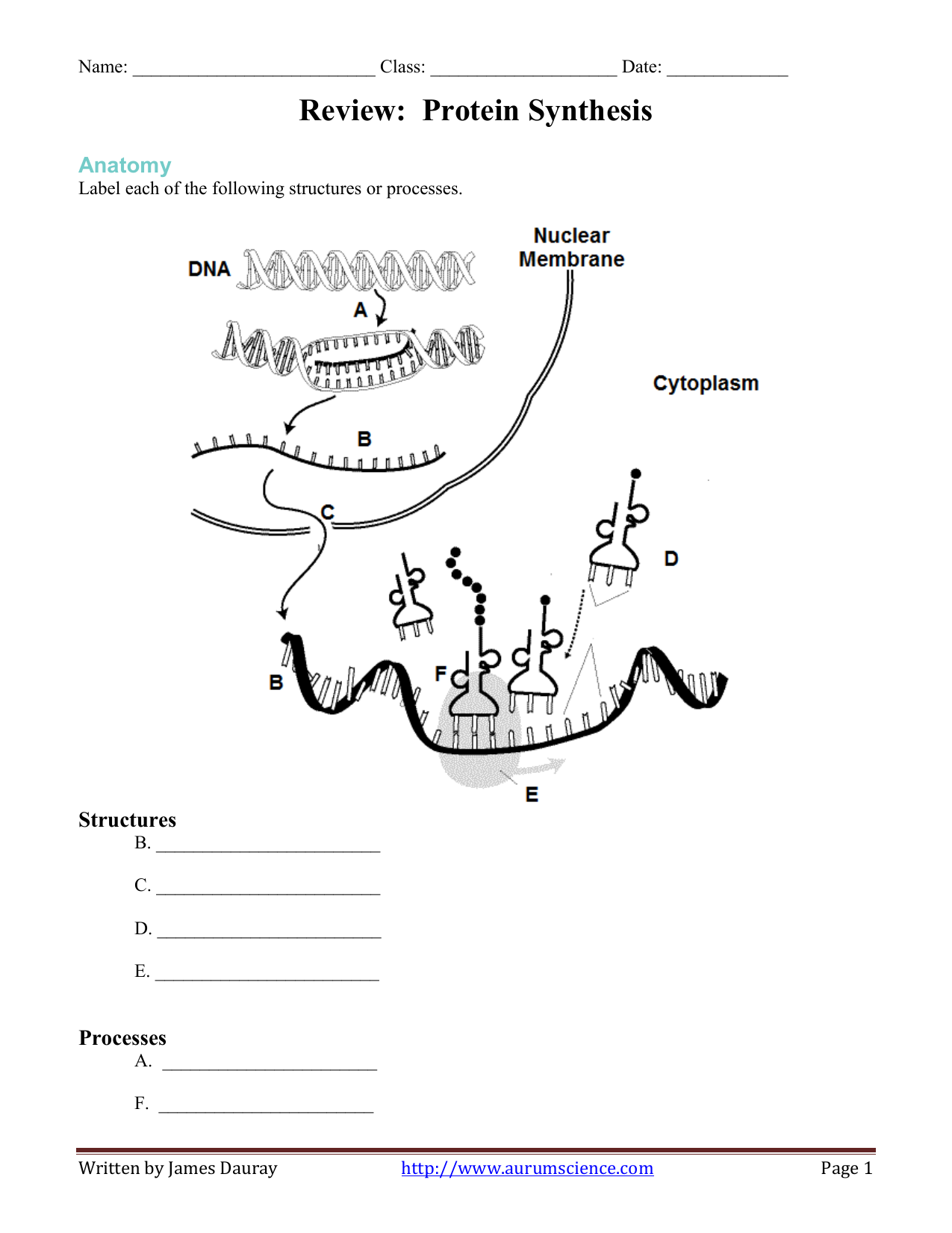 Review: Protein Synthesis