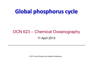 Global phosphorus cycle