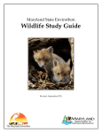 Wildlife Study Guide
