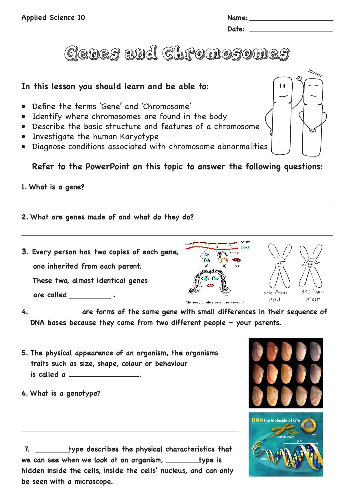Genes And Chromosomes Worksheet Answers - Nidecmege