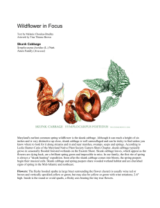 Maryland Native Plant Society: Wildflower in Focus: Skunk Cabbage