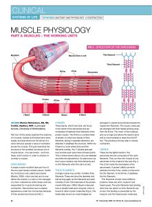 061205Muscle physiology