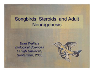 Songbirds, Steroids, and Adult Neurogenesis