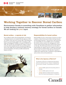 Working Together to Recover Boreal Caribou