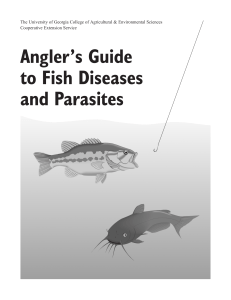 Angler`s Guide to Fish Diseases and Parasites