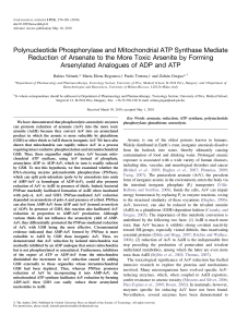 Polynucleotide Phosphorylase and Mitochondrial