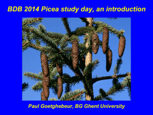 BDB 2014 Picea study day, an introduction