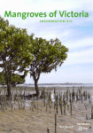 Mangroves of Victoria Information Kit