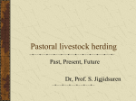 Pastoral Livestock Herding - Society For Range Management
