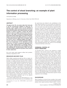 The control of shoot branching: an example of plant information