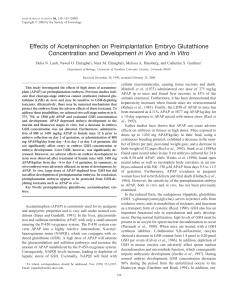 Effects of Acetaminophen on Preimplantation Embryo Glutathione