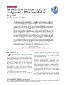 Interrelations between translation and general mRNA degradation in