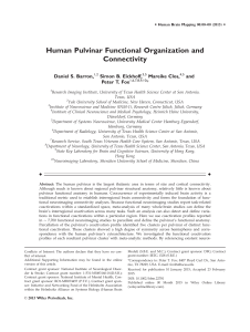 Human Pulvinar Functional Organization and Connectivity