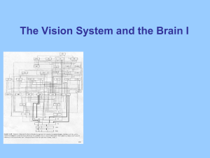 Lectures for 5th week: Visual System I