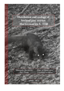 DISTRIBUTION AND ECOLOGY OF LOWLAND PINE MARTEN