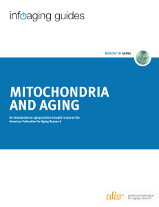 mitochondria and aging - American Federation for Aging Research