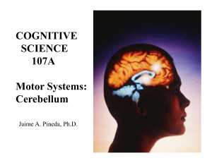 Cerebellum - UCSD Cognitive Science