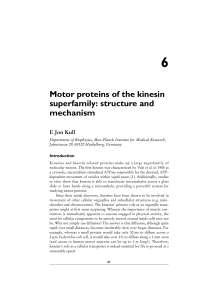 Motor proteins of the kinesin superfamily