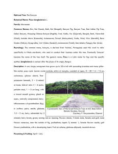 National Tree in PDF format