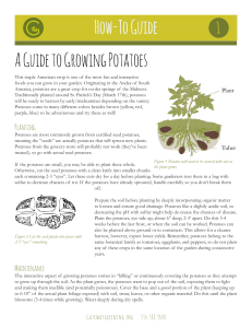 How-To Guide A Guide to Growing Potatoes