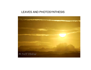 LEAVES AND PHOTOSYNTHESIS