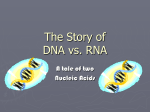 The Story of DNA vs. RNA