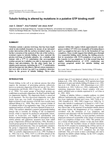 Tubulin folding is altered by mutations in a putative GTP binding motif