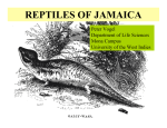 reptiles of jamaica - the Jamaica Protected Areas Trust