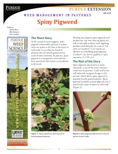 Spiny Pigweed - Purdue Extension