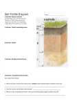 Soil Profile Diagram Name_______________________ O Horizon