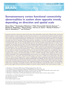Somatosensory cortex functional connectivity