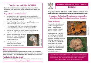 Fungi fact sheet - the City of London Corporation