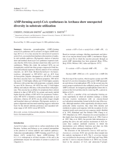 AMP-forming acetyl-CoA synthetases in Archaea show