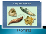6 Groups of Plant like Protists