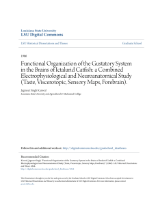 Functional Organization of the Gustatory System in the Brains of