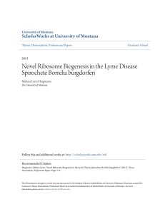 Novel Ribosome Biogenesis in the Lyme Disease Spirochete