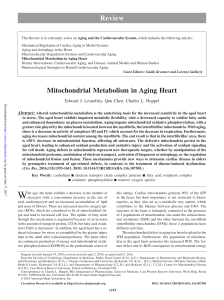 Mitochondrial Metabolism in Aging Heart