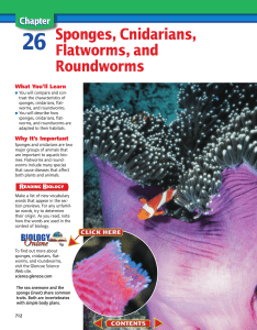 Chapter 26: Sponges, Cnidarians, Flatworms, and Roundworms
