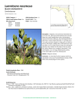Lumnitzera racemosa - Florida Natural Areas Inventory