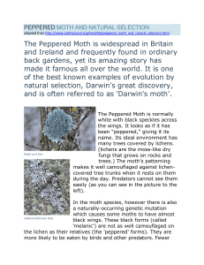 The Peppered Moth is widespread in Britain and Ireland