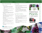 Poisonous Plants in New Mexico brochure