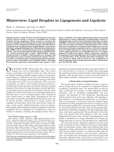 Minireview: Lipid Droplets in Lipogenesis and Lipolysis